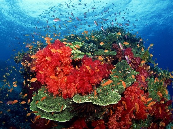 Цвета кораллов
